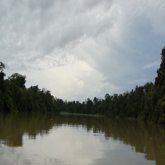 Rainforest and river Sabah Borneo Malaysia filming from boat Stock Footage