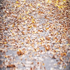 Autumn Leaves Falling in autumnal Park. Fall. Slow Motion Dolly shot 240 fps Stock Footage