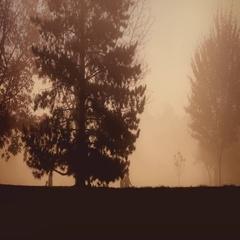 People Walking In Park On Misty Day Stock Footage