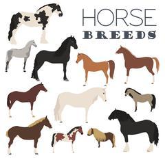 Horse breeding icon set. Farm animal. Flat design Stock Illustration