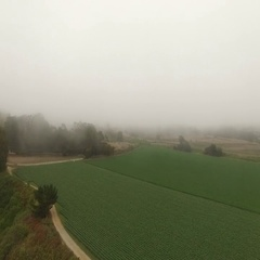 4K Aerial Drone Foggy Pasture Stock Footage