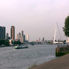 Skyline Erasmus Bridge Rotterdam Stock Footage