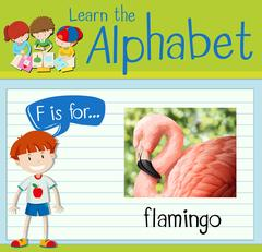 Flashcard letter F is for flamingo Stock Illustration