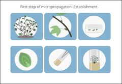 Plant in vitro icon. Micropropagation - establishment. Educational biotechnology Stock Illustration