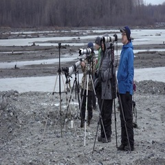 A Group of Wildlife Photographers in Alaska Stock Footage
