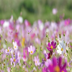 Flower garden with very nice weather for background Stock Footage