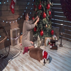 A pretty woman petting her bulldog at xmas eve Stock Footage