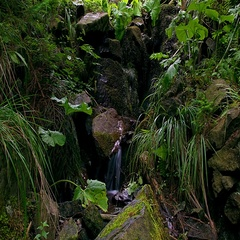 Time lapse of Moss On The Rocks Forest Stream Stock Footage