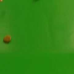 Shelled pumpkin seeds on a green background. Slow motion. Close-up. Stock Footage