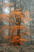 Surreal alternate color fantasy Autumn Fall forest landscape conceptual image Stock Photos