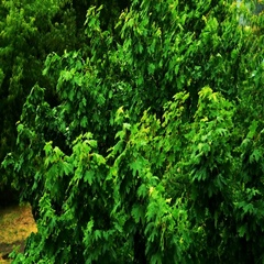 Heavy rain, strong wind shakes the branches of trees, rain water drains Stock Footage
