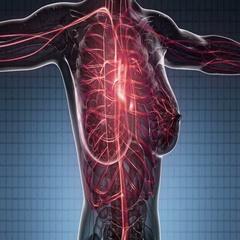 Loop science anatomy scan of woman heart and blood vessels glowing Stock Footage