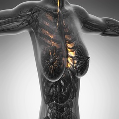 Loop science anatomy scan of human lungs glowing with yellow Arkistovideo