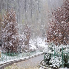 Early winter in park, snow in botanic garden Stock Footage