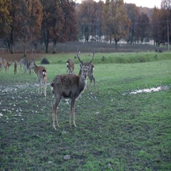 Spotted deer in nature Stock Footage