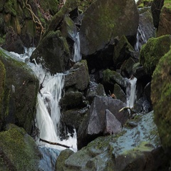 Water flows around moss covered rocks in Welsh countryside UK. Stock Footage
