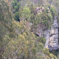36 Cliffs and trees canopy of rain forest Blue Mountains Australia Stock Footage