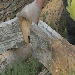 Man chopping wood with a chainsaw for a future home. A lot of sawdust and wood Stock Footage