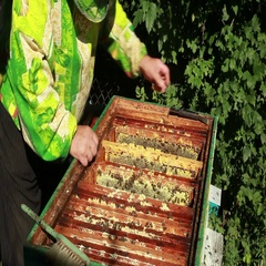 Beemaster collects honey Stock Footage