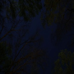 Timelapse of Stars and Clouds Through Forest Canopy, 4K Stock Footage