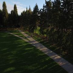 Fall Marathon Reveal Over Trees Stock Footage