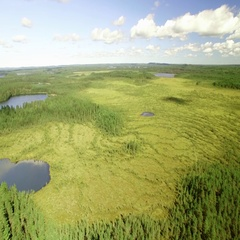 Natural bog with small lakes at the Leivonmaki national park in Finland, aerial Stock Footage