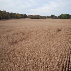 St Croix Valley Fall Corn Field High Slow Reveal Stock Footage