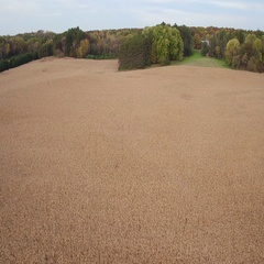 St Croix Valley Fall Corn Field Flying Backwards Stock Footage