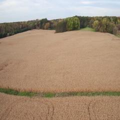 St Croix Valley Fall Corn Field Flying Sideways Stock Footage