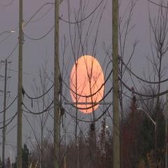 Supermoon rising in Markham Canada November 14 2016 Stock Footage
