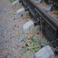 Rails and sleepers in the forest Stock Footage