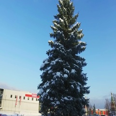 Walk around the pine tree at city covered with snow. Stock Footage