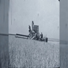 Canadian Wheat Harvest Combine Farm Men Work 1940s Vintage Film Home Movie 10659 Stock Footage