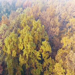 Aerial view of autumn forest covered with fog, colourful deciduous trees Stock Footage