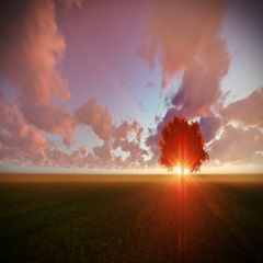 Solitary tree on green meadow, timelapse sunset Stock Footage