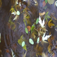 Yellow puddle leaves autumn floating in pool Stock Footage
