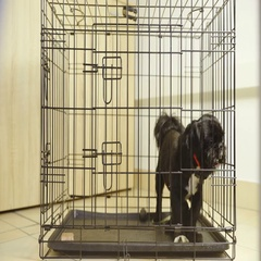Small black dog in cage barks and try to push through steel wire 4K Stock Footage