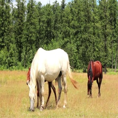 Horse And Foal On Pasture Stock Footage