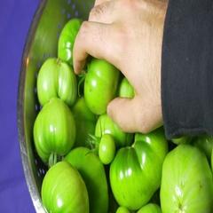 Green tomato tomatos tomatoes Stock Footage