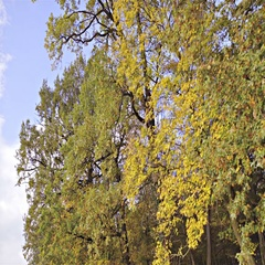 Colorful trees in fall with yellow, brown and green leaves 4K Stock Footage