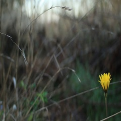 Yellow flower fluttering in the wind Stock Footage