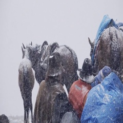 Muleteers waiting under a snow storm Stock Footage