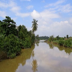 Tropical river with shrubs in southeast asian Stock Footage