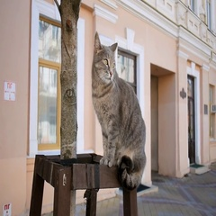 City street cat looks around Stock Footage