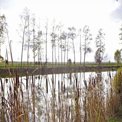 Marsh vegetation growing beside a lake 4K Stock Footage