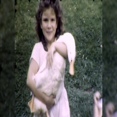 Cute Little Girl Holds Pet Duck 1950s Vintage Film Home Movie  Stock Footage