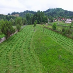 Flight over men mowing hay, green forest hills Stock Footage