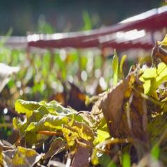 Rack focus rake on the lawn in autumn Stock Footage