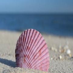 Cockleshells on sand, the beach Stock Footage