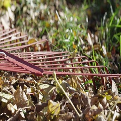 Rake close up in the leaves on a lawn cleaning up yard Stock Footage